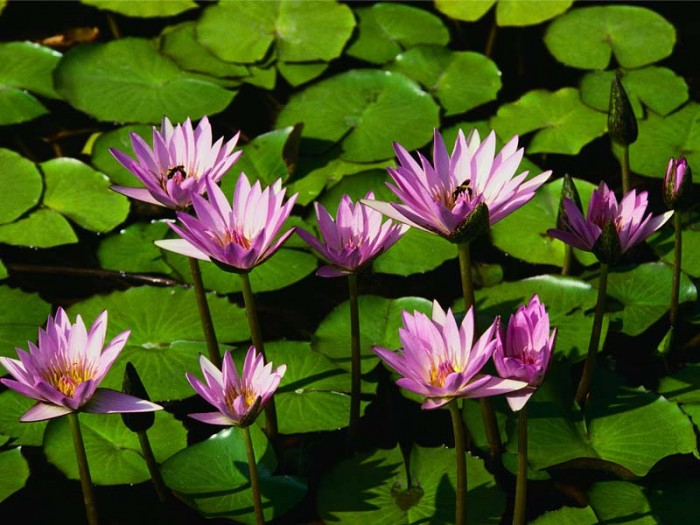 water lillies :: 7 reasons a blog is the fastest, easiest and most effective type of website for your show